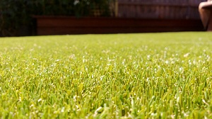 Artificial grass in Hawthorn